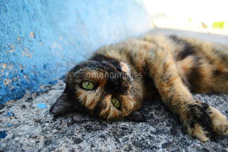 道端で寝転がっている猫の写真素材 [FYI03139848]