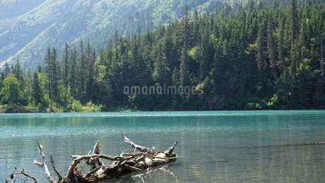 アラスカ Seward アメリカ 43の写真素材 [FYI03139851]