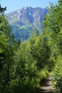 アラスカ Seward アメリカ 45の写真素材 [FYI03139861]