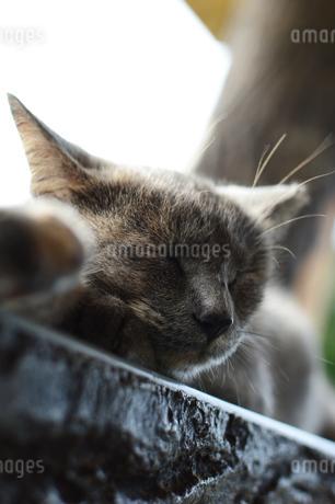 のんびり寝ている猫の写真素材 [FYI03139876]