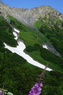 アラスカ Seward アメリカ 65の写真素材 [FYI03139896]