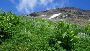 アラスカ Seward アメリカ 89の写真素材 [FYI03140207]