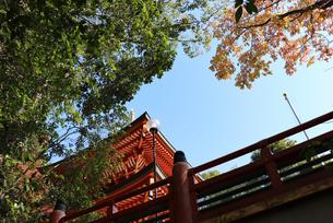 秋のお寺の写真素材 [FYI03140331]