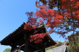 お寺の秋の写真素材 [FYI03140332]