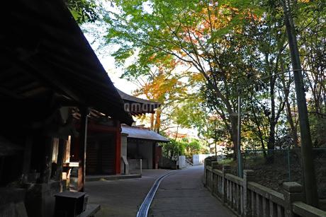 秋のお寺の参道の写真素材 [FYI03140338]