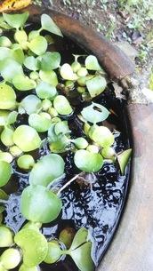 水と水草の写真素材 [FYI03140366]