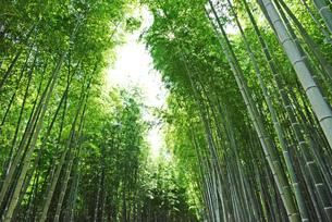 竹林の写真素材 [FYI03140457]