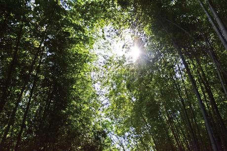 竹林と陽射しの写真素材 [FYI03140458]
