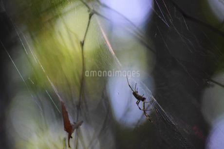 蜘蛛の写真素材 [FYI03140459]