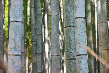 竹林の写真素材 [FYI03140462]