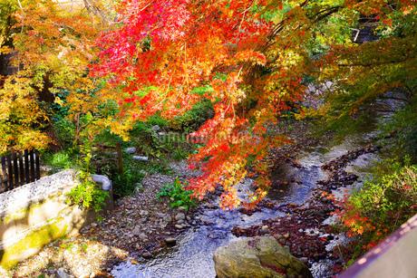 川辺に色とりどりに咲く紅葉の写真素材 [FYI03140514]