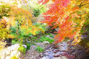川辺に見える色とりどりの紅葉の景色の写真素材 [FYI03140515]