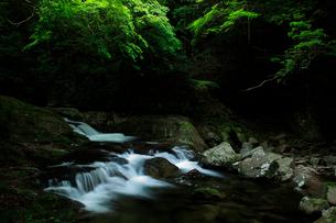 赤目四十八滝の清流と新緑の写真素材 [FYI03140863]