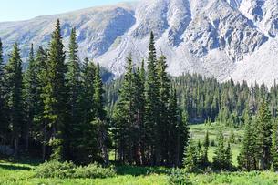 米コロラド州ロッキーマウンテン山岳部樹木限界線付近の針葉樹林の植生風景の写真素材 [FYI03140945]