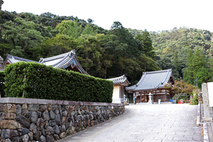 緑に囲まれたお寺の写真素材 [FYI03140961]