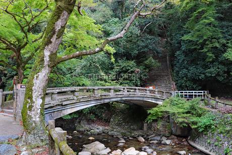 渓谷の橋の写真素材 [FYI03140993]
