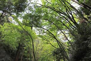 森の風景の写真素材 [FYI03140997]