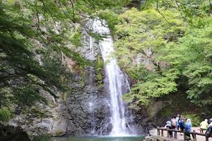箕面大滝の写真素材 [FYI03141001]
