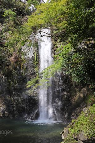 箕面の滝の写真素材 [FYI03141003]