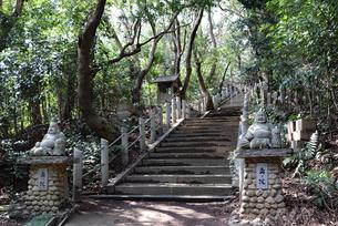 森に囲まれた奥の院の入口の写真素材 [FYI03141112]
