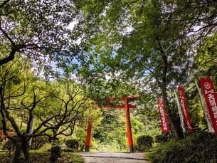 日本の稲荷神社の写真素材 [FYI03141397]