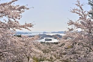 西行戻しの松より望む春の松島 宮城県の写真素材 [FYI03141428]
