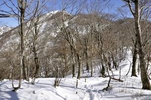 大丸の森より塔ノ岳への道の写真素材 [FYI03141482]