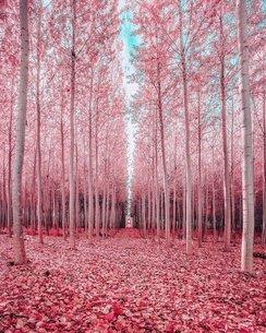 オレゴンの森の写真素材 [FYI03141640]