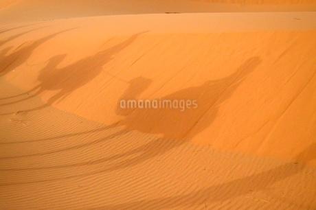 ラクダの影の写真素材 [FYI03141695]