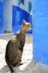 青い街と猫の写真素材 [FYI03141711]