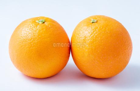 オレンジの写真素材 [FYI03142407]