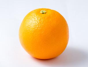 オレンジの写真素材 [FYI03142408]