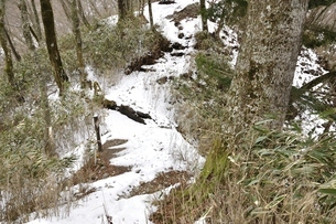 雪のツツジ新道の写真素材 [FYI03142524]