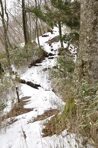 雪のツツジ新道の写真素材 [FYI03142525]