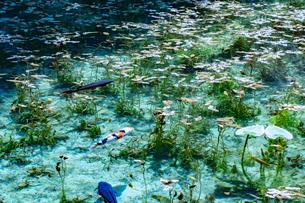 モネの池の写真素材 [FYI03142609]