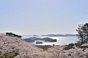 西行戻しの松より望む春の松島 宮城県の写真素材 [FYI03142692]