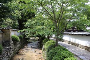 お寺の参道と小川の写真素材 [FYI03142765]