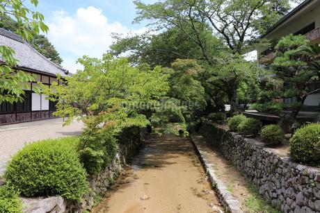 夏の小川の写真素材 [FYI03142766]