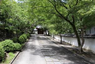 緑の参道の写真素材 [FYI03142769]