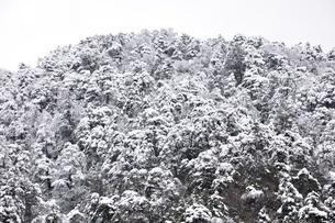 樹氷の丹沢山地の写真素材 [FYI03143156]