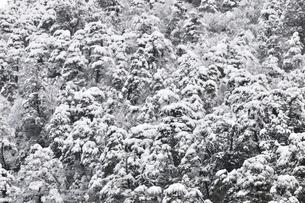 樹氷の丹沢山地の写真素材 [FYI03143158]
