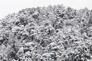 樹氷の丹沢山地の写真素材 [FYI03143159]