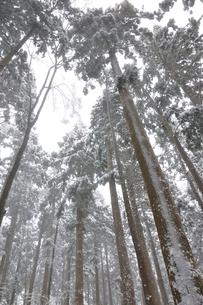 豪雪の森の写真素材 [FYI03143181]