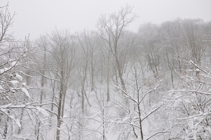 豪雪の丹沢山地の写真素材 [FYI03143189]