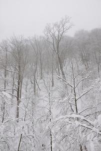 豪雪の丹沢山地の写真素材 [FYI03143190]