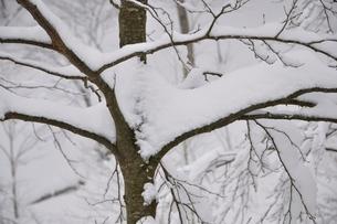 厳冬の山地の写真素材 [FYI03143191]
