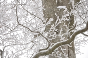 厳冬の山地の写真素材 [FYI03143197]