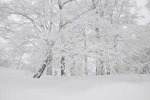 豪雪の丹沢山地の写真素材 [FYI03143203]