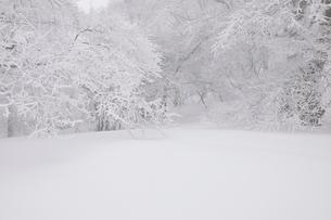 豪雪の丹沢山地の写真素材 [FYI03143210]