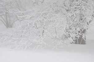 豪雪の丹沢山地の写真素材 [FYI03143220]